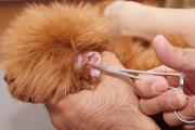 8.耳毛抜き&耳掃除